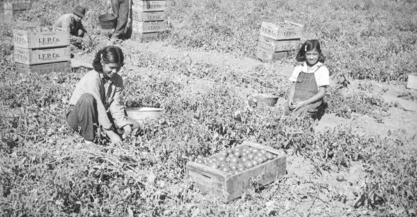 Family picking tomatoes in the San Fernando Valley, ca. 1937 | Herman J. Schultheis Collection, Los Angeles Public Library.